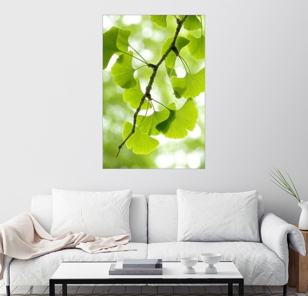 Posterlounge Wandbild - Thomas Herzog »G I N G K O« | Dekoration > Bilder und Rahmen > Bilder | Holz | Posterlounge