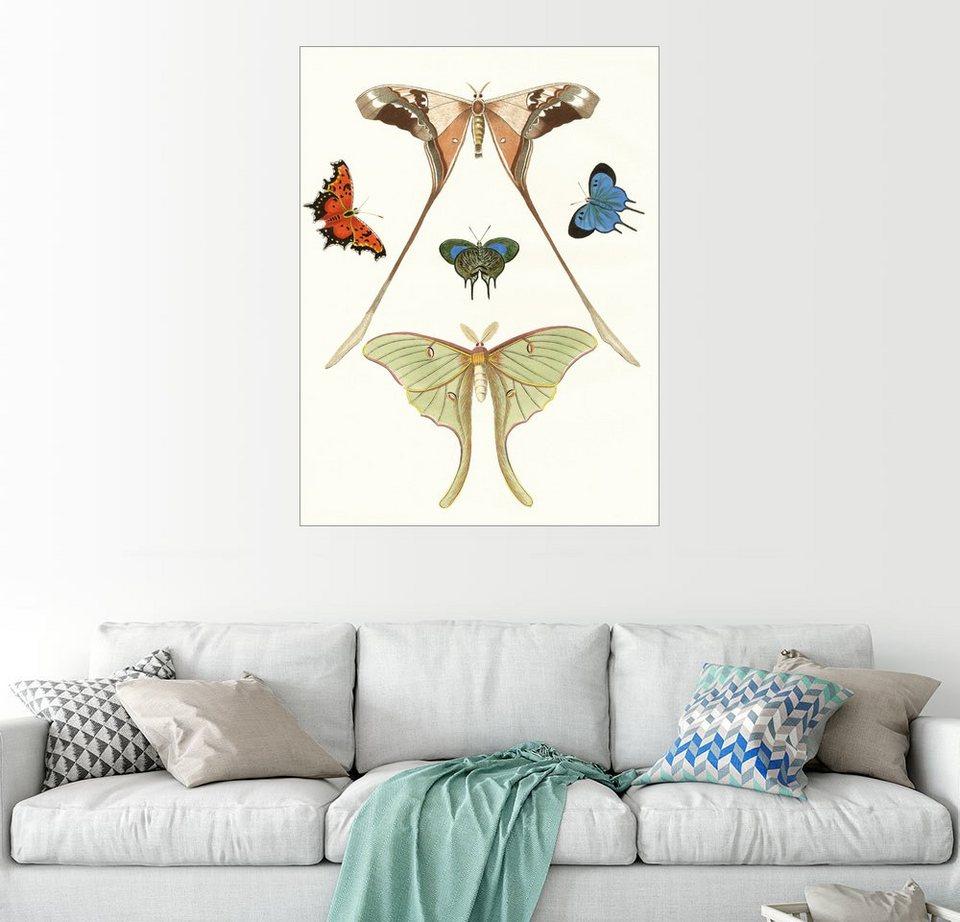 Uberlegen Posterlounge Wandbild   German School »Verschiedene Arten Von  Schmetterlingen«