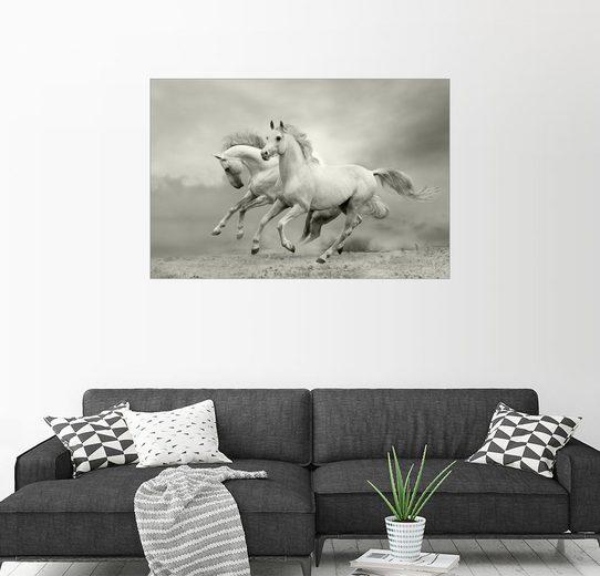 Posterlounge Wandbild »Pferde im Sommer«
