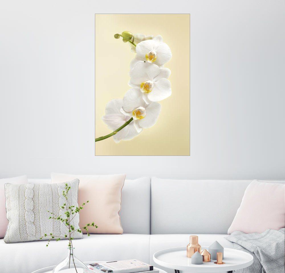 Posterlounge Wandbild »Weiße Orchidee«