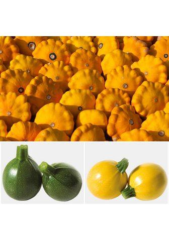 VOLMARY Rinkinys: Zucchini 3 Sorten im derinys...