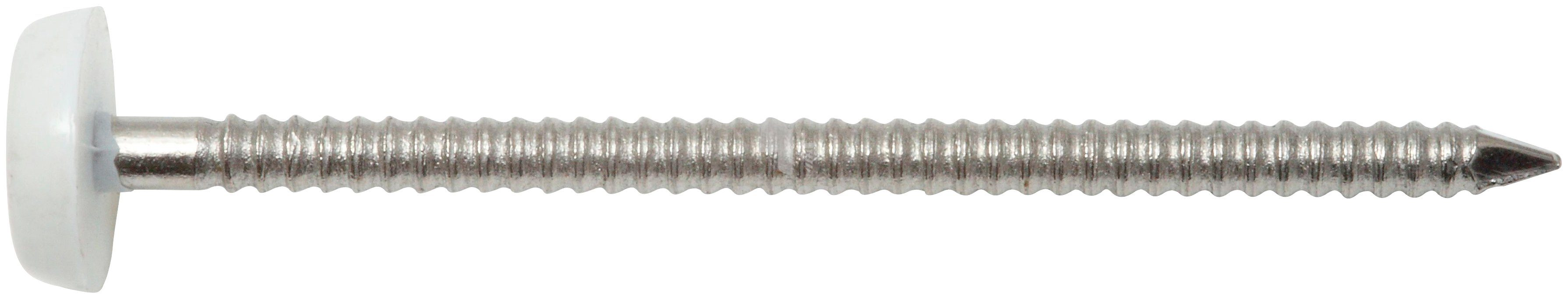RAMSES Nagel , Edelstahlnägel mit Plastikkopf 2 x 30 mm, 250 Stk.