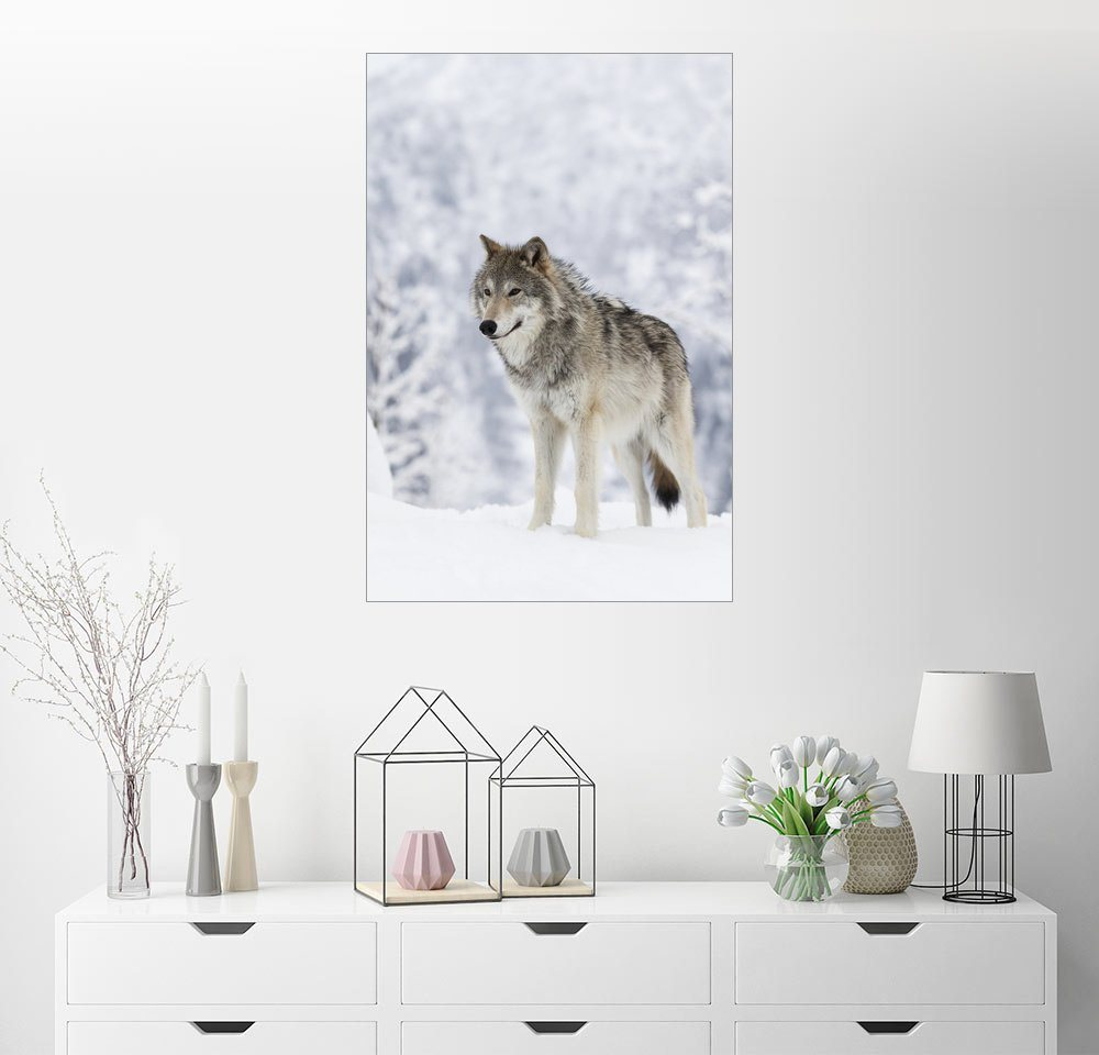 Posterlounge Wandbild – Doug Lindstrand Tundra Wolf im Schnee bunt,mehrfarbig | 04053823311057