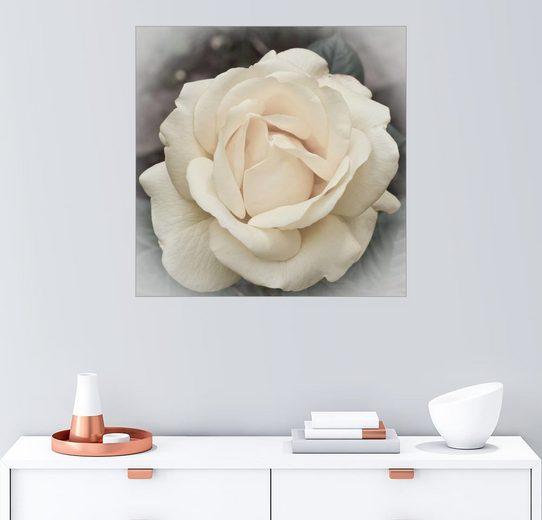 Posterlounge Wandbild - Karin Döling »Rose in Pastell«