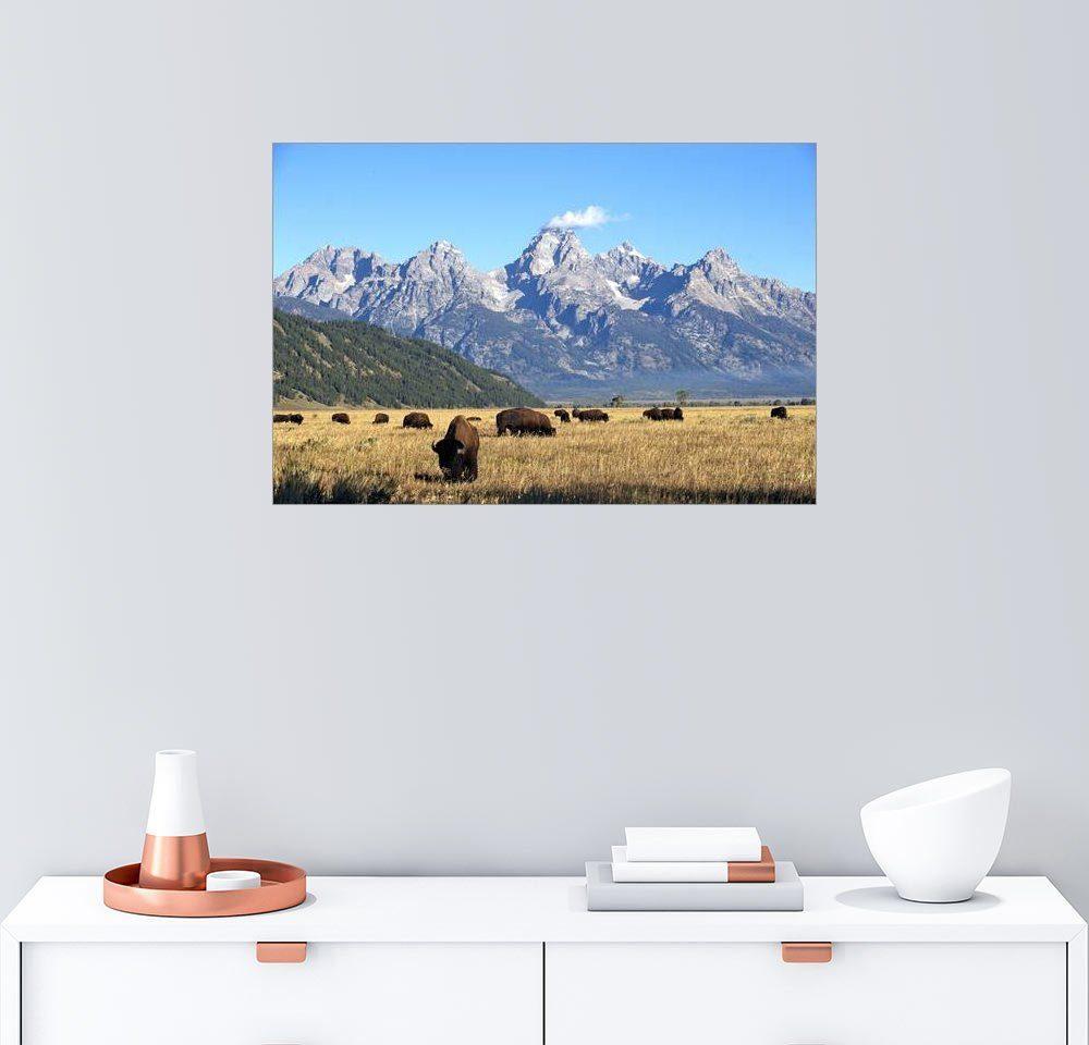 Posterlounge Wandbild - Bob Smith »Bisons vor der Teton-Bergkette«