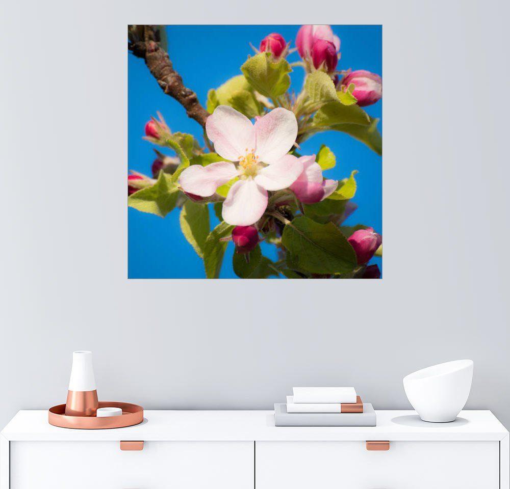Posterlounge Wandbild - Michael Haußmann »Apfelblüte«