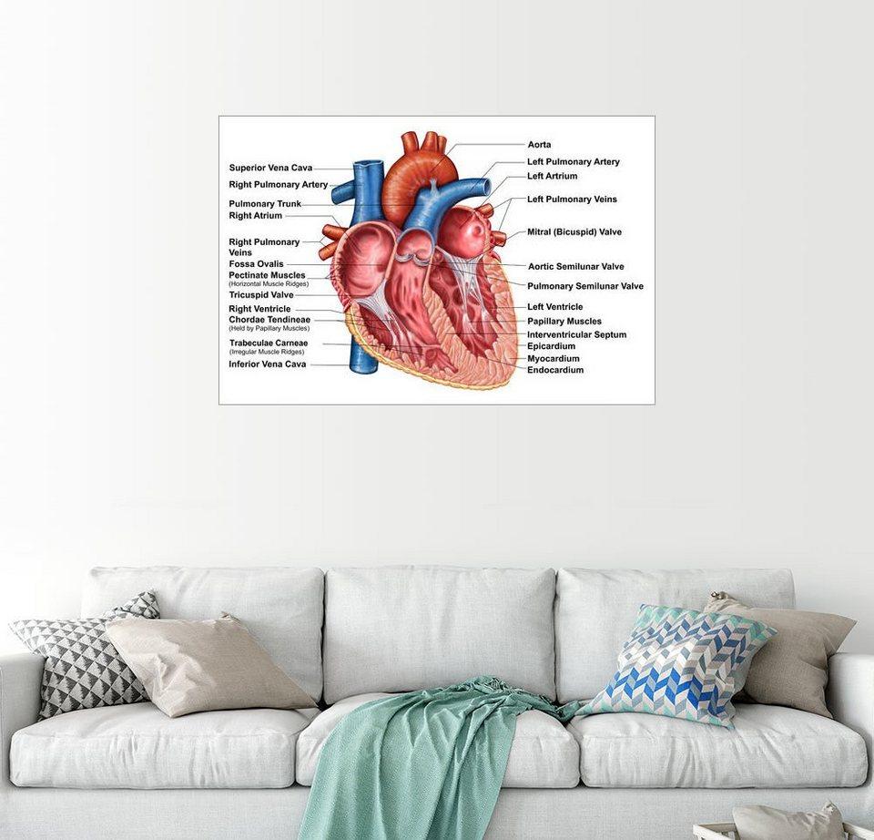 Posterlounge Wandbild - Stocktrek Images »Anatomie des Herzens ...