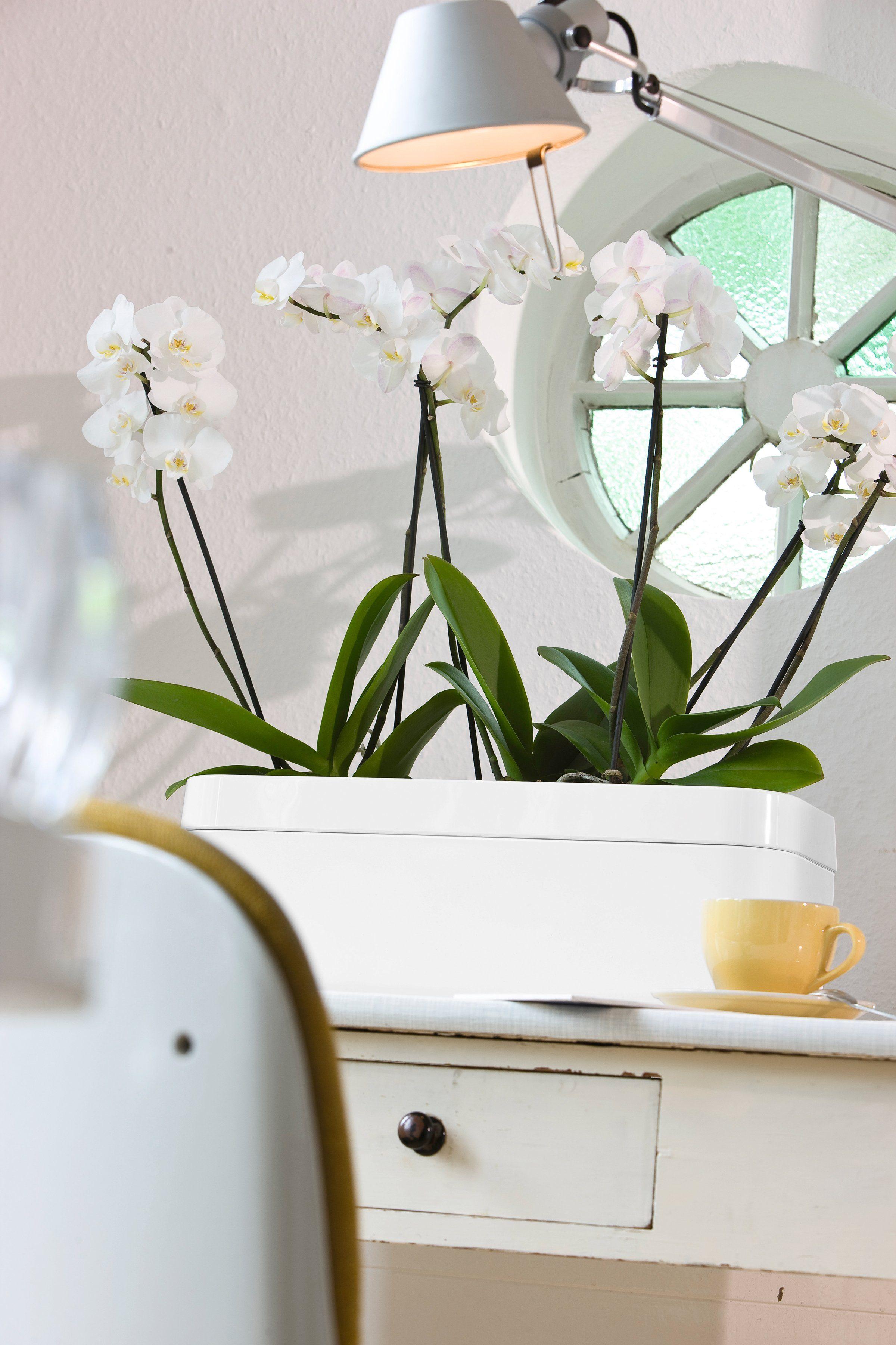 EMSA Blumenkasten »myBOX«, 50 cm, Kasten und Rahmen weiß
