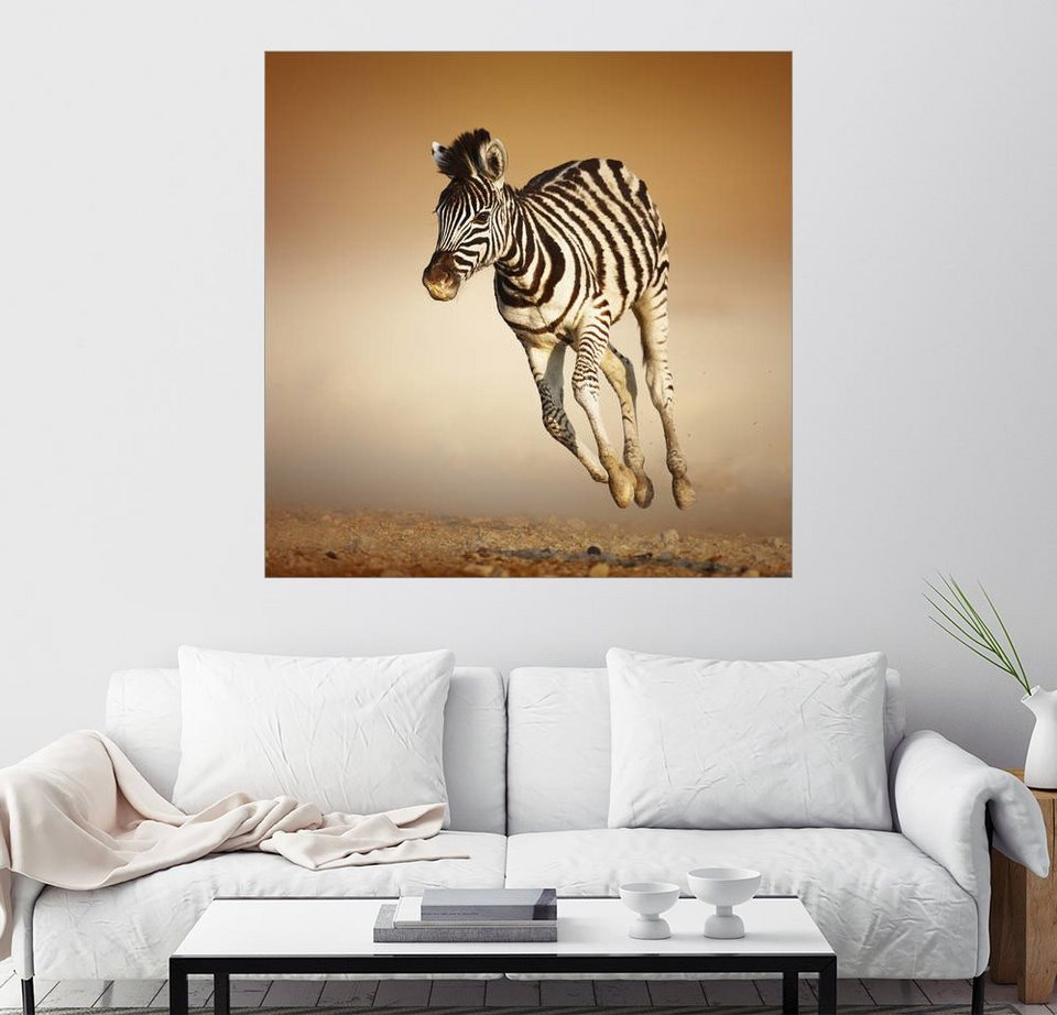 posterlounge wandbild johan swanepoel zebra kalb im. Black Bedroom Furniture Sets. Home Design Ideas