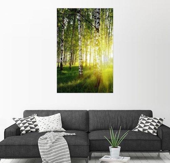 Posterlounge Wandbild »Lichtdurchflutete Birken«