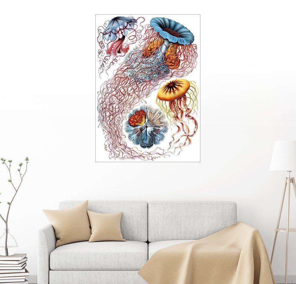 Posterlounge Wandbild - Ernst Haeckel »Discomedusae 8« | Dekoration > Bilder und Rahmen > Bilder | Holz | Posterlounge