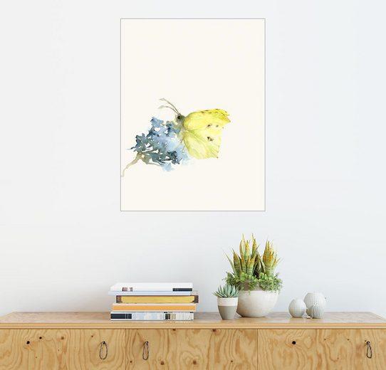 Posterlounge Wandbild - Dearpumpernickel »Zitronenfalter«