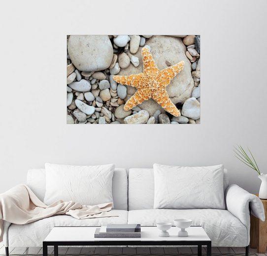 Posterlounge Wandbild - Tony Craddock »Seestern auf Steinen«