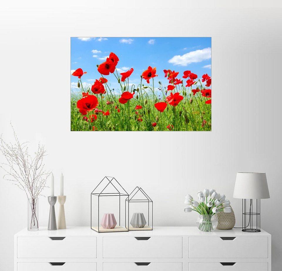 Posterlounge Wandbild »rote Mohnblumen auf der grünen Wiese« online ...