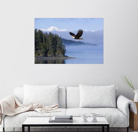 Posterlounge Wandbild - John Hyde »Weißkopfseeadler im Flug«