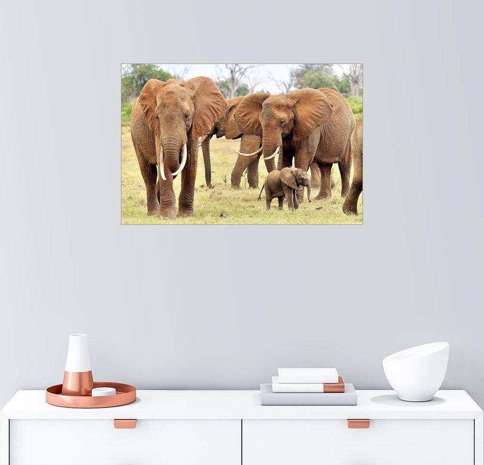 Posterlounge wandbild j rgen feuerer verspieltes elefantenbaby mit familie online kaufen otto - Wandbild familie ...