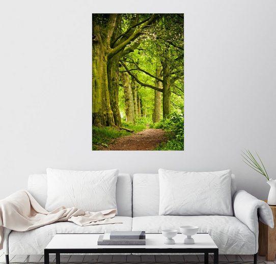 Posterlounge Wandbild »Schöne Frühlingsfarben in einem Wald«