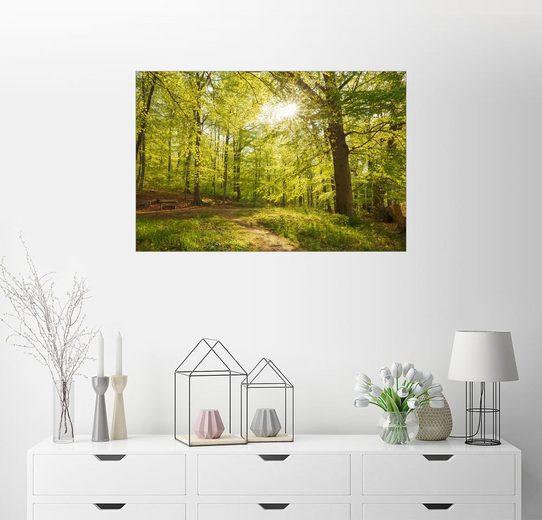 Posterlounge Wandbild - Oliver Henze »Frühlingswälder mit Sonnenschein«