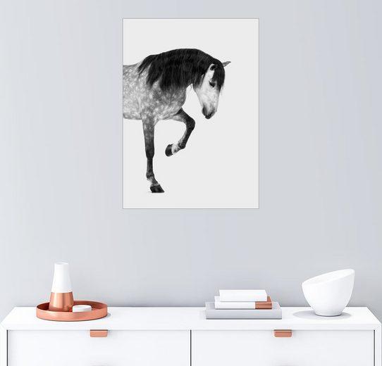 Posterlounge Wandbild - Finlay and Noa »Pferd«