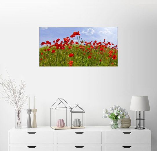 Posterlounge Wandbild - Melanie Viola »Mohnblumen Panorama«