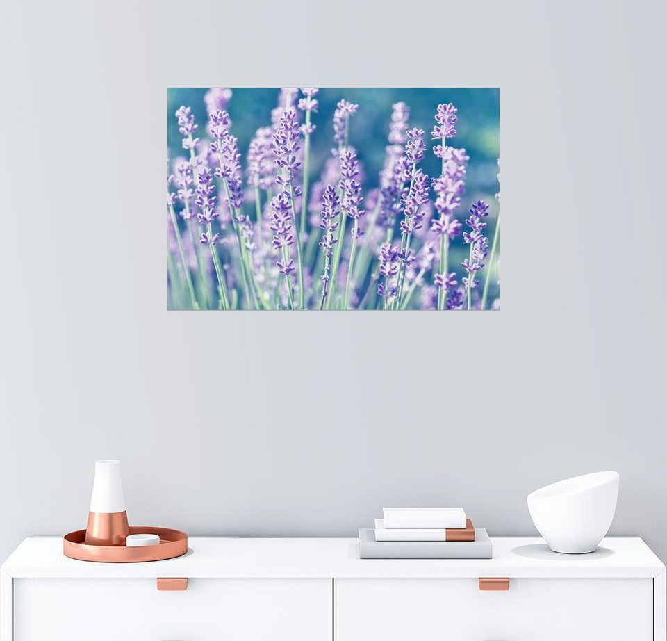 Posterlounge Wandbild - Atteloi »Lavendel Lila« | OTTO