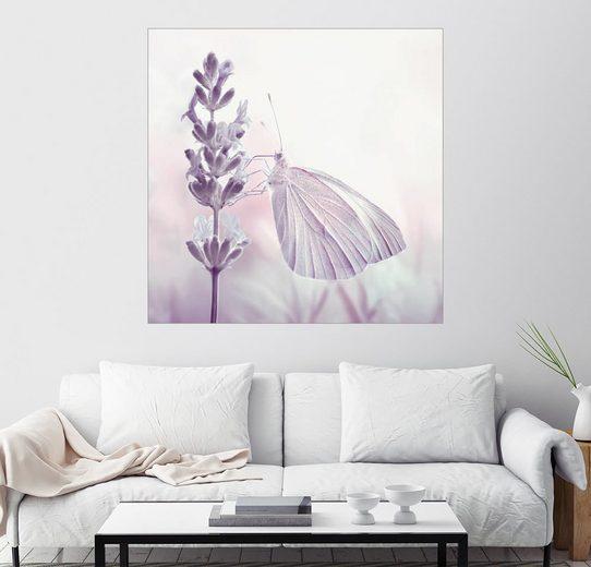 Posterlounge Wandbild - Atteloi »Schmetterling«