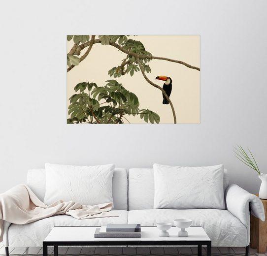 Posterlounge Wandbild - Nicole Duplaix »Ein Riesentukan auf einem Ast«
