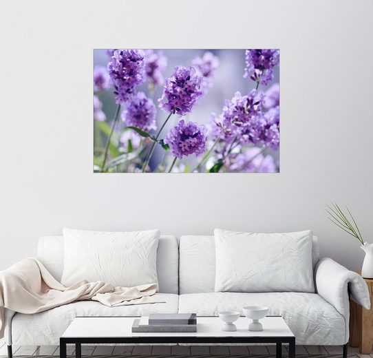 Posterlounge Wandbild - Atteloi »Lavendel«