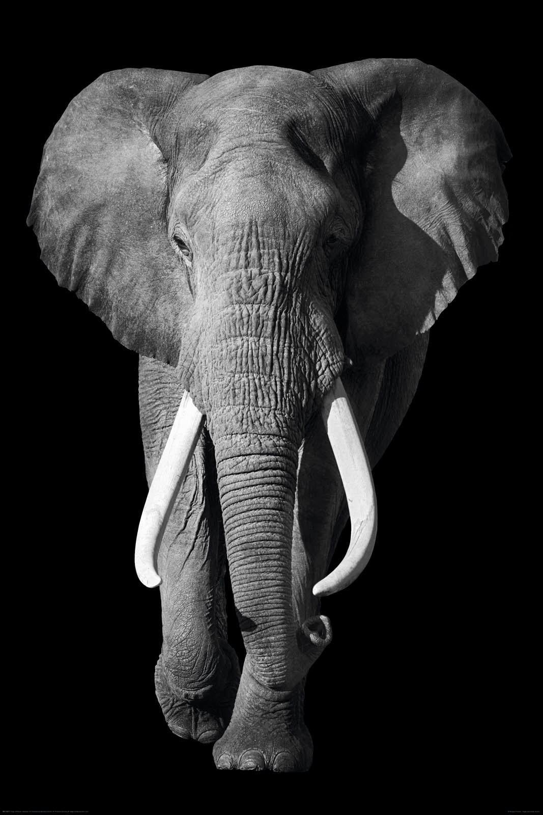 Deco-Panel »Könige der Natur - Elefant«, Tiermotiv, 60/90 cm