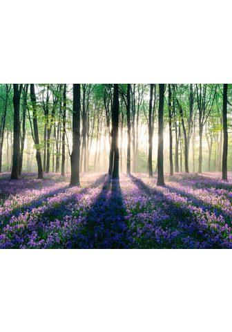 HOME AFFAIRE Paveikslas »Verzauberter Wald« Wald