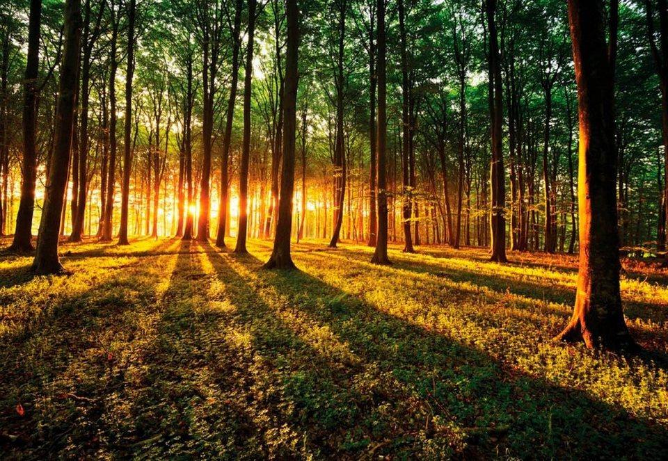 Fototapete Sonnenaufgang Im Wald Wald 368254 Cm