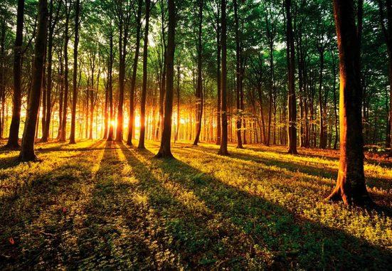 Fototapete »Sonnenaufgang im Wald«, Wald, 368/254 cm