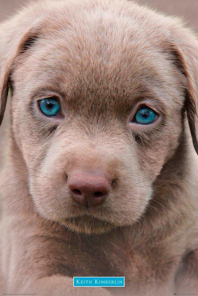 Hunde Sachen Kaufen : deco panel keith kimberlin hundewelpe tiermotiv 60 90 cm online kaufen otto ~ Watch28wear.com Haus und Dekorationen