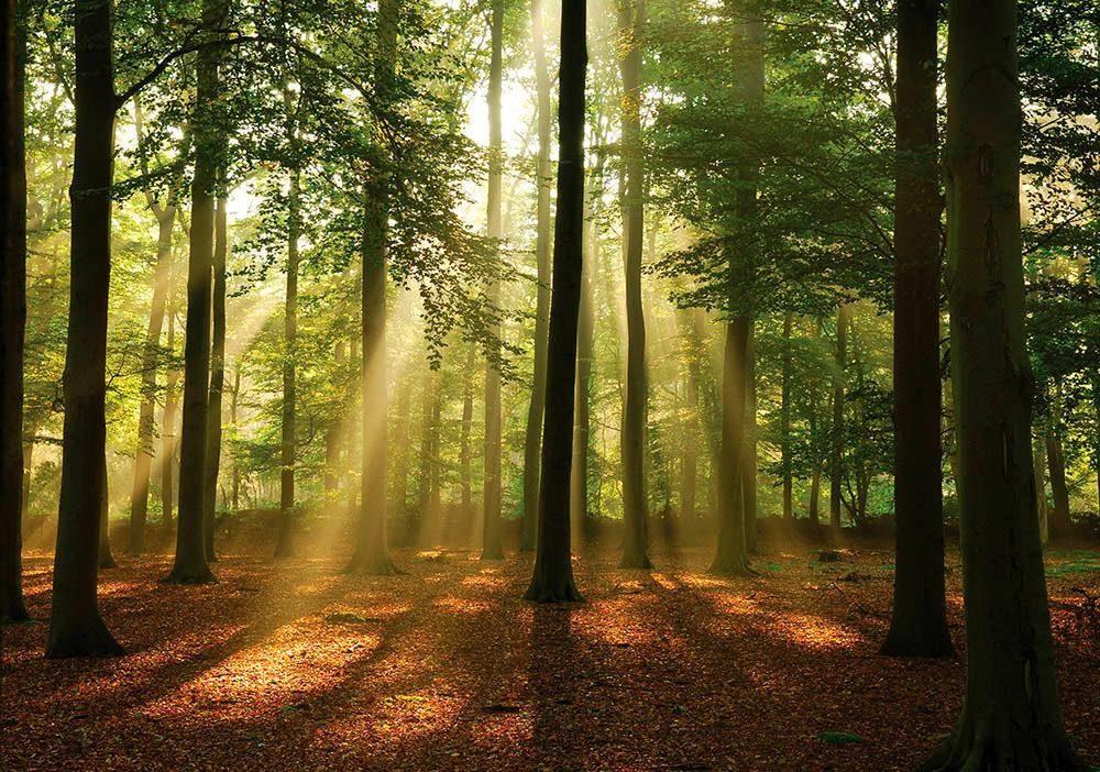 Fototapete »Sonnenstrahlen im Wald« 254/184 cm