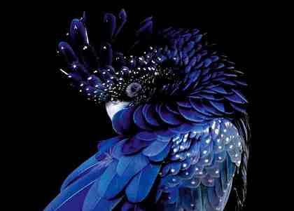 Premium collection by Home affaire Acrylglasbild »Blauer Vogel« 140/100 cm