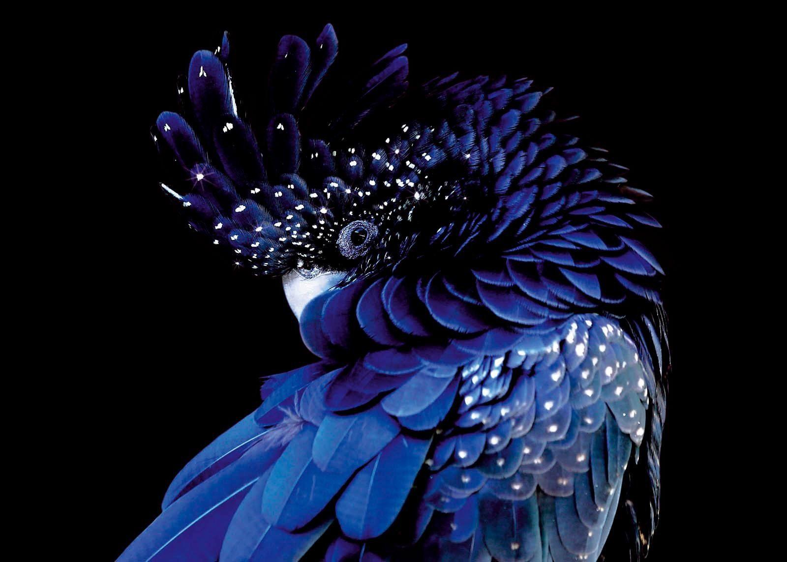 Premium collection by Home affaire Acrylglasbild »Blauer Vogel«, 140/100 cm