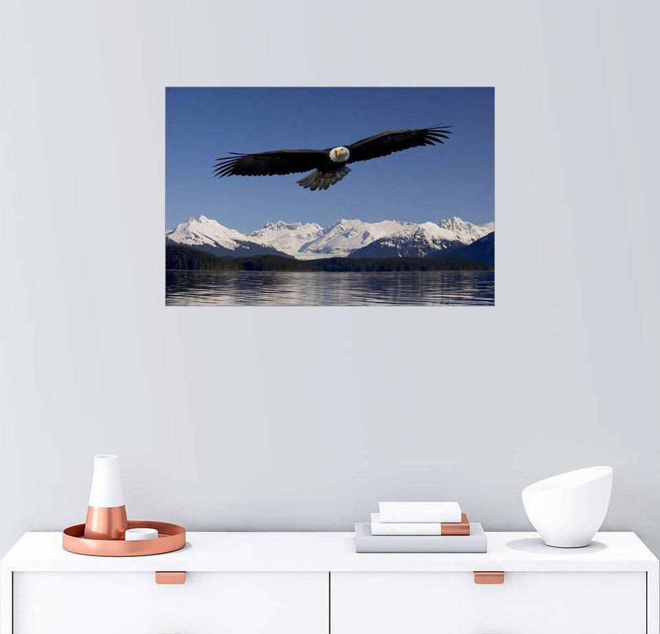 Charmant Weißkopfseeadler Färbung Seite Einfach Ideen - Beispiel ...