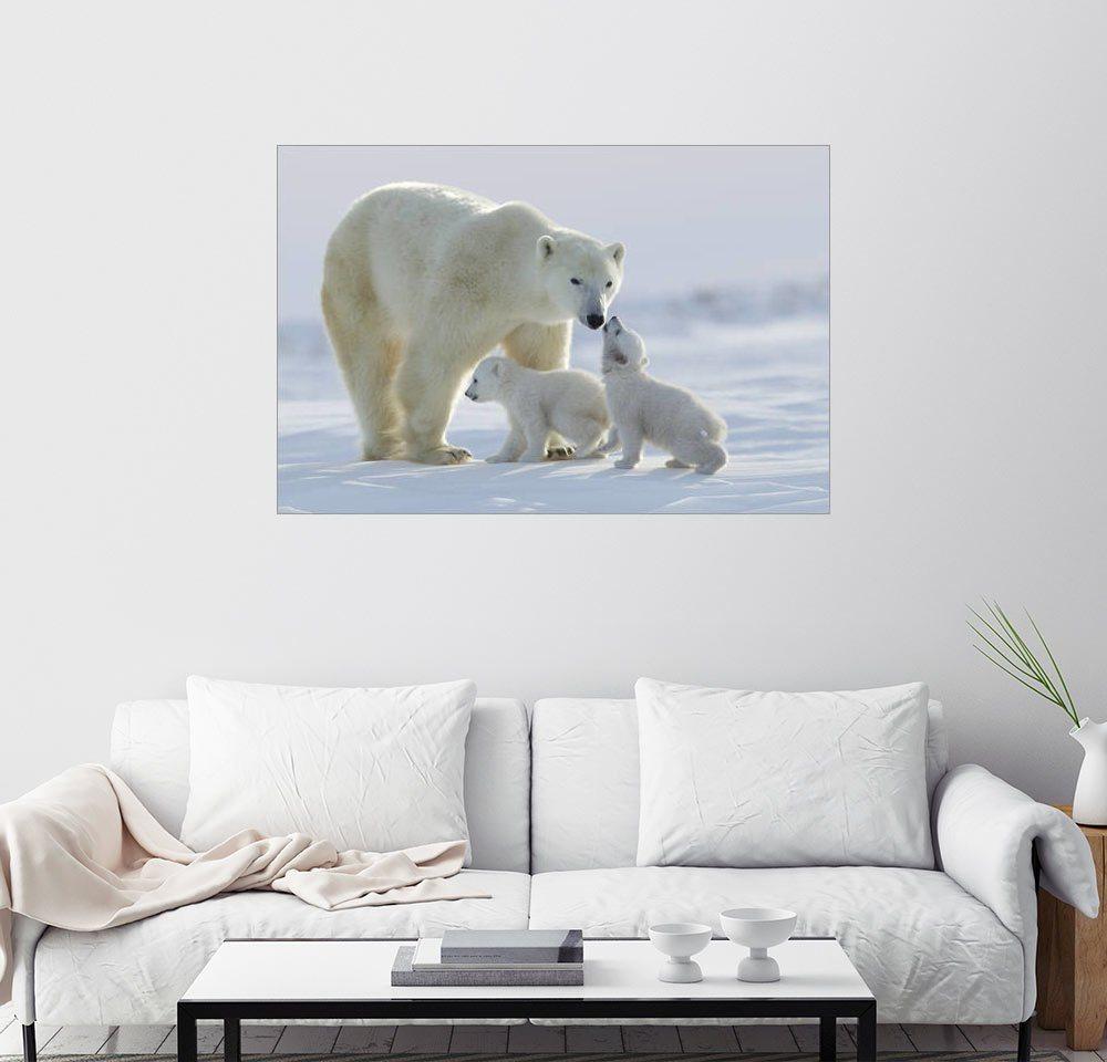 Posterlounge Wandbild - David Jenkins »Eisbärfamilie im Wapusk Nationalpark« | Dekoration > Bilder und Rahmen > Bilder | Holz | Posterlounge