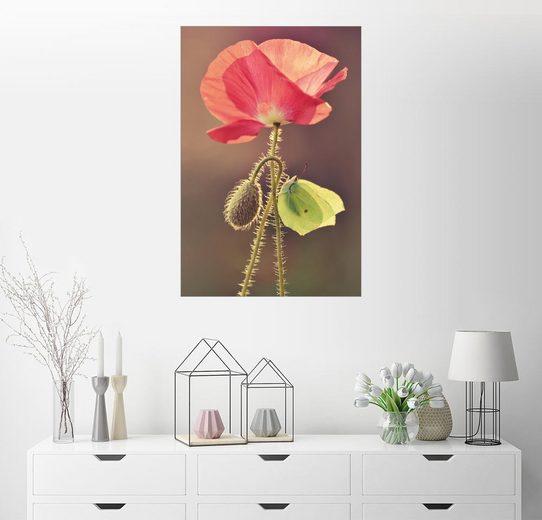 Posterlounge Wandbild - Jaroslaw Blaminsky »Mohnblume und Schmetterling«