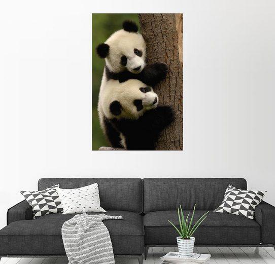 Posterlounge Wandbild - Pete Oxford »Pandababys«
