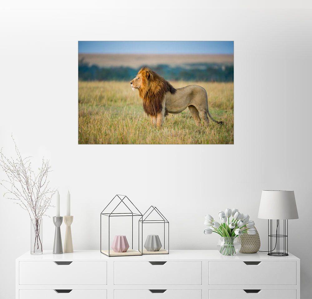 Posterlounge Wandbild   Ingo Gerlach »Der König Der Löwen«