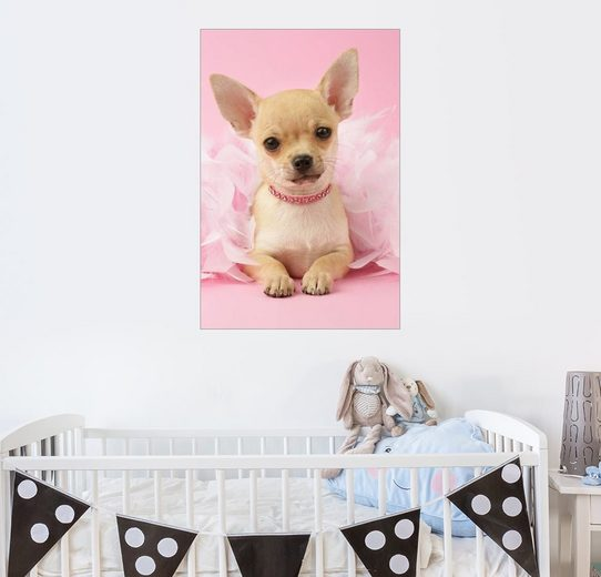Posterlounge Wandbild - Greg Cuddiford »Ballett-Chihuahua«