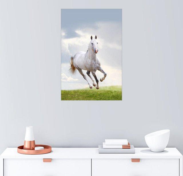 Posterlounge Wandbild »Hengst im Galopp« | Dekoration > Bilder und Rahmen > Bilder | Posterlounge