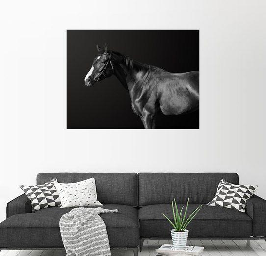 Posterlounge Wandbild »Budjonny (Pferd)«