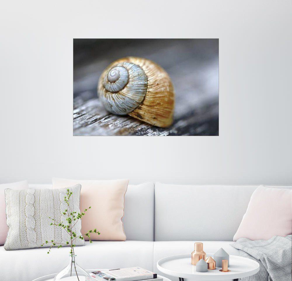 Posterlounge Wandbild - Renate Knapp Waldundwiesenfee »Schneckenhaus«