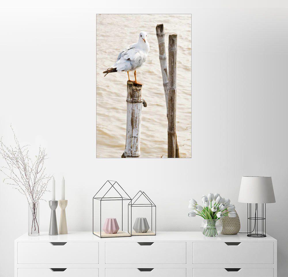 Posterlounge Wandbild »Möwe auf Pfahl«
