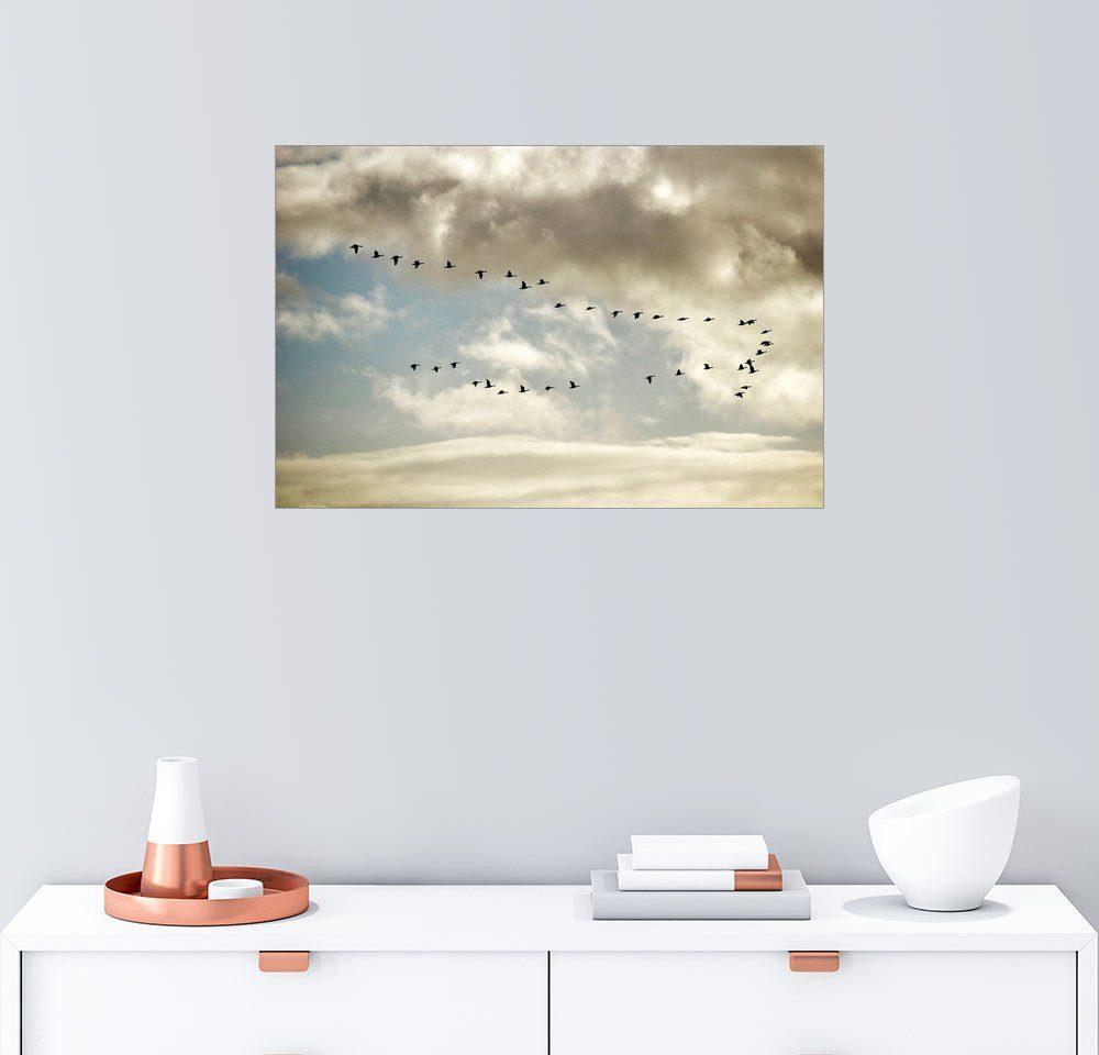 Posterlounge Wandbild »Flieg mit den Gänsen davon«