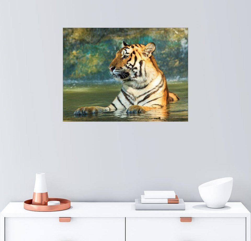 Posterlounge Wandbild »Tiger liegt im Wasser« | OTTO