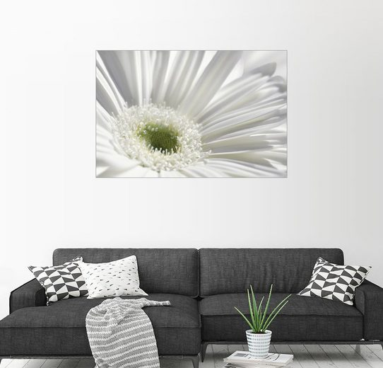 Posterlounge Wandbild - Atteloi »Weiße Gerbera«