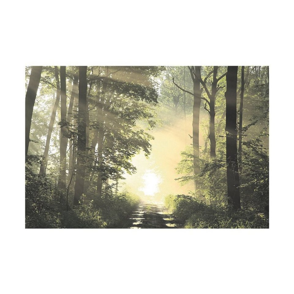 PAPERFLOW Wandbild »Wald«, Ausführung: Optimierte Farben